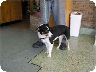Corgi Dog for adoption in Inola, Oklahoma - Bosco