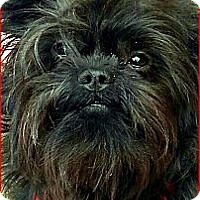 Adopt A Pet :: REBEL - ADOPTION PENDING - Seymour, MO