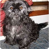 Adopt A Pet :: Shadow - Mays Landing, NJ