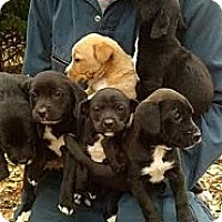 Adopt A Pet :: Puppies - Freeport, NY