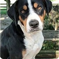 Adopt A Pet :: Davey - Handsome and Sweet - Zebulon, NC
