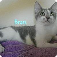Adopt A Pet :: Bran - Chandler, AZ