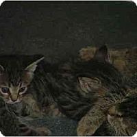 Adopt A Pet :: Chubz - East Tawas, MI