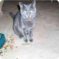 Adopt A Pet :: Katie - Hamburg, NY
