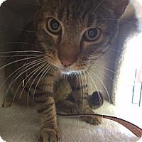 Adopt A Pet :: Rex - Santa Monica, CA