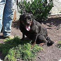 Adopt A Pet :: Bebe - Frederick, PA