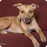 Adopt A Pet :: Linda - Houston, TX