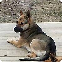 Adopt A Pet :: Summer - Huntsville, TN
