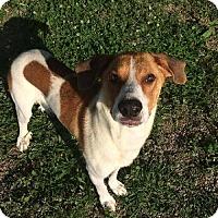 Adopt A Pet :: Bradley - Bellbrook, OH