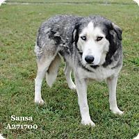 Adopt A Pet :: SANSA - Conroe, TX