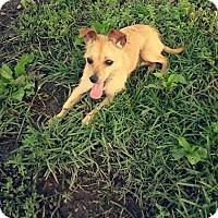 Adopt A Pet :: Remi - Russellville, KY