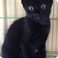 Adopt A Pet :: Apollo - Island Park, NY