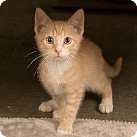 Adopt A Pet :: Taylor - Wilmington, DE