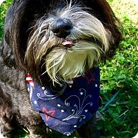 Adopt A Pet :: Little Buddy (RBF) - Harrisonburg, VA