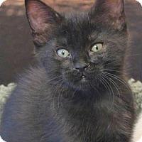 Adopt A Pet :: Monica - Davis, CA