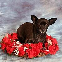 Adopt A Pet :: Sunshine - Aqua Dulce, CA