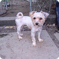 Adopt A Pet :: Lexi - Loudonville, NY