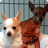 Adopt A Pet :: Luna and Lulu (bonded pair) - Waco, TX