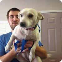 Adopt A Pet :: Blizzard - Rexford, NY