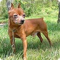 Adopt A Pet :: Yolo - Canterbury, CT