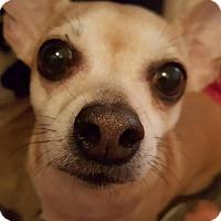 Adopt A Pet :: Butters - Tucson, AZ