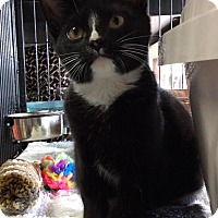 Adopt A Pet :: Lea - Breinigsville, PA