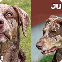 Adopt A Pet :: Juda - Idaho Falls, ID