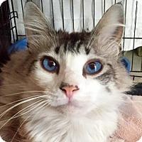Adopt A Pet :: Simba - Landenberg, PA
