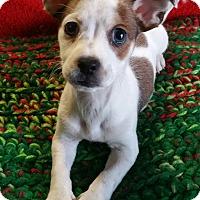 Adopt A Pet :: Bagel - Los Angeles, CA