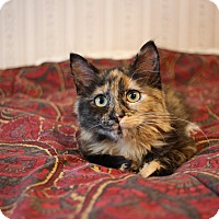 Adopt A Pet :: Gina Mae - Pine Bush, NY