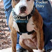 Adopt A Pet :: JOLEEN - Golsboro, NC