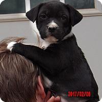 Adopt A Pet :: Zita (8 lb) Video! - Sussex, NJ