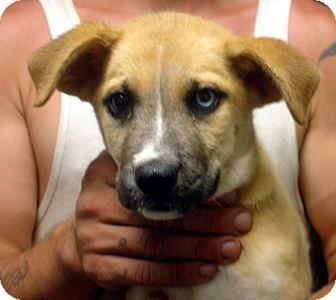 Dog Rescue Brattleboro Vt