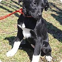 Adopt A Pet :: Ariel - Wytheville, VA