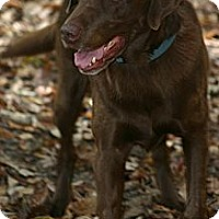 Adopt A Pet :: Jack - Franklin, TN