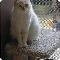 Adopt A Pet :: Pebbles - Brea, CA