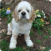 Adopt A Pet :: Casey - Sugarland, TX