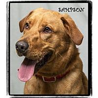 Adopt A Pet :: Sampson - Warren, PA