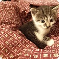 Adopt A Pet :: Playful Julia - Columbus, OH