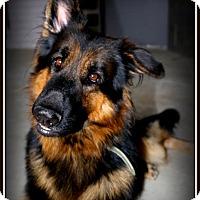 Adopt A Pet :: Kilo - Phoenix, AZ