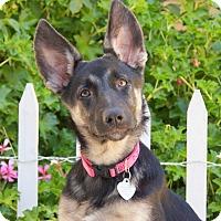 Adopt A Pet :: Jackie - Thousand Oaks, CA