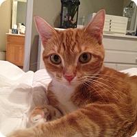 Adopt A Pet :: Electra - Smyrna, GA
