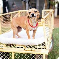 Adopt A Pet :: Rosie - Peachtree City, GA