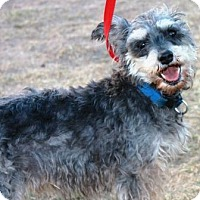 Adopt A Pet :: Jangle - Gilbert, AZ
