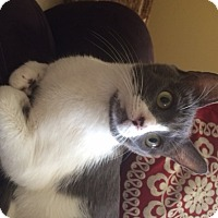 Adopt A Pet :: Valentina - Orange, CA