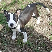 Adopt A Pet :: Oreo - Davison, MI