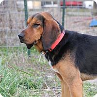 Adopt A Pet :: Cletus - Pittsboro, NC
