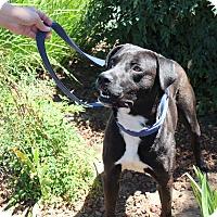 Adopt A Pet :: Gus - Yuba City, CA