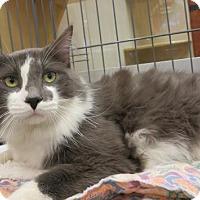Adopt A Pet :: Matthew - Hamilton, ON