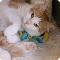 Adopt A Pet :: Gabby - Encinitas, CA